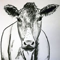 Cow drawings