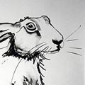 Hare drawings