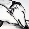 Greyhound drawings
